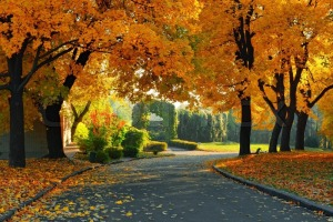 2837057-green-and-yellow-trees-in-park-at-fall-season